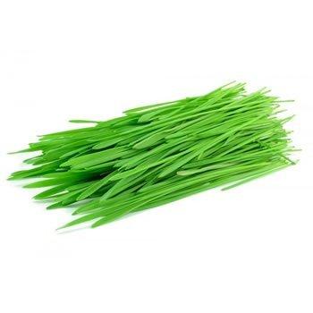 psenicna-trava